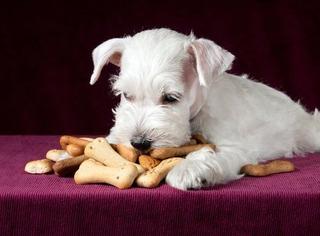 Galletitas Golosinas De Higado Ó Carne Para Perros X 250 Grs