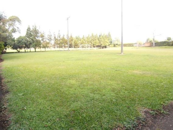 Terreno Para Venda Em São José Dos Pinhais, Borda Do Campo - Te-054_2-490321