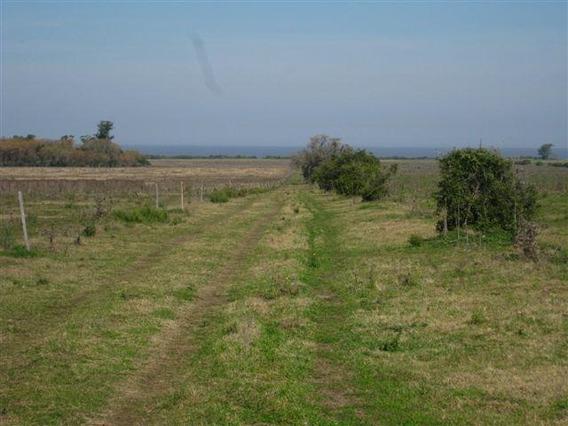 104 Has, 80% Agrícola-frutihortícola, Colonia, Uruguay