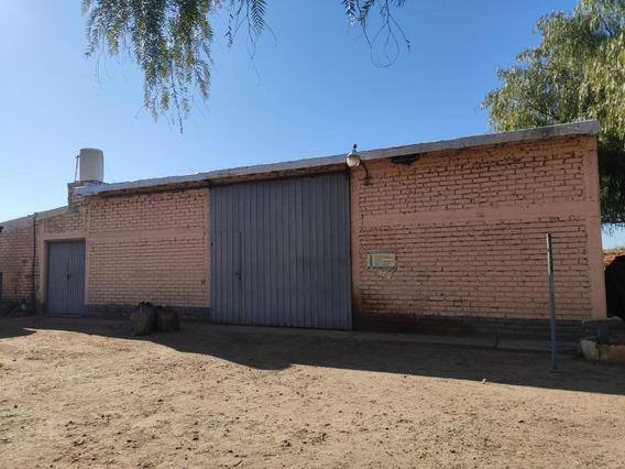 Vendo Finca 40 Has. Viñedos, San Martin, Mendoza