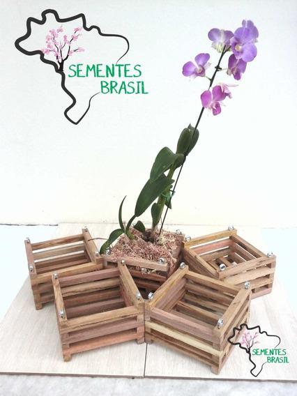 Cachepo De Madeira Rústica P/ Orquídeas Kit C/ 20 Un - 10x10