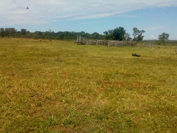 Fazenda A Venda Em Camapuã - Ms (pecuária) - 949