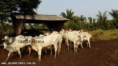 Área Rural Para Venda Em Ariquemes, 2200 Alqueires R$ 5.000.000,00 - Jr70