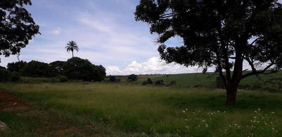 Terrenos - Venda - Palmeiras - Cod. 13505 - V13505