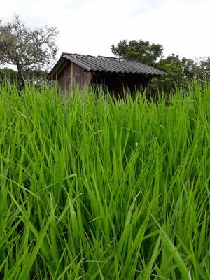 Excelente Fazenda No Goiás Cria E Recria De Gado