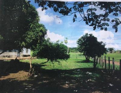 Fazenda A Venda No Pantanal Ms (pecuária) - 734
