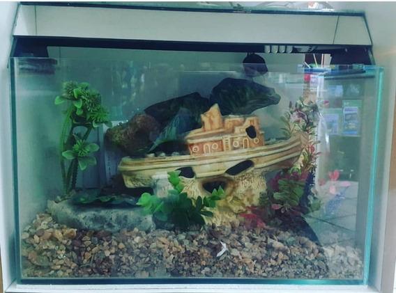 Aquario Completo 40cm