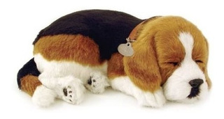 Beagle Animado Mascotas
