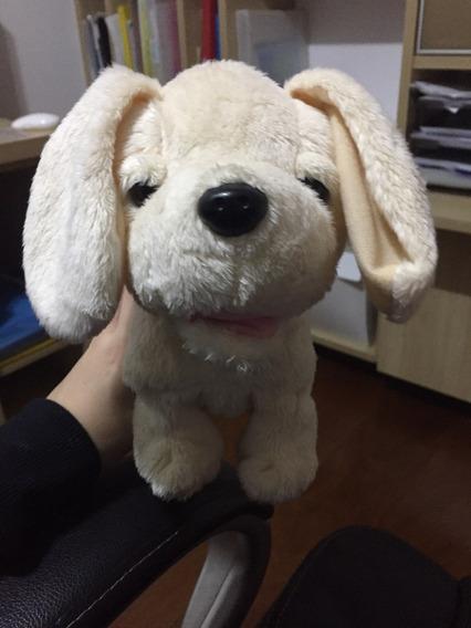 Cachorrinho Estrela