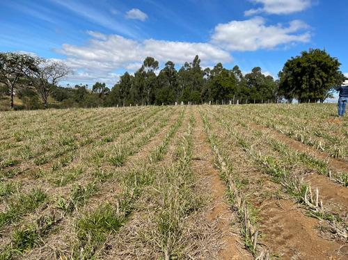 Imagem 1 de 14 de 16- Excelentes Terrenos De 1000m A Venda Em Igaratá