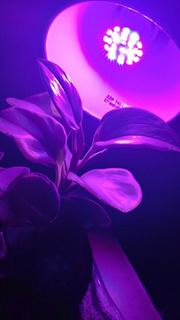Lámpara Led 28w E27 Aluminio Espectro Completo Grow Indoor