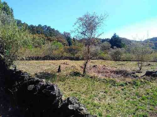 Venta De Terreno Plano En San Juan Tlacotenco, Tepoztlán, Morelos