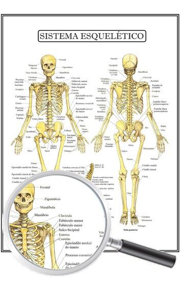 Poster Anatomia Humana, Sistema Esquelético 30x40 Cm