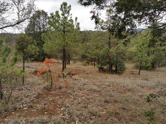 Vendo Terrenos De 5000m2 En Zacatlan De Las Manzanas