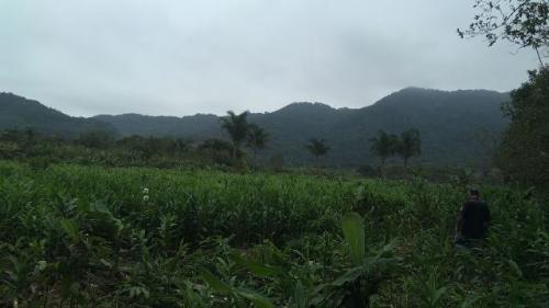 Ótimo Sítio No Jardim Mambu, Em Itanhaém, Ref. 4648 M H
