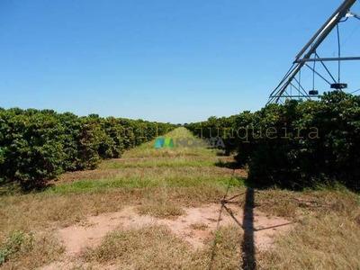 Fazenda Lavouras 1700 Ha Região Pirapora (mg) - Codigo: Fa0252 - Fa0252