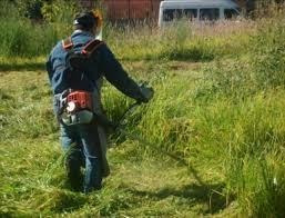 Corte De Pasto Podas Limpieza De Fondos Retiro De Escombros