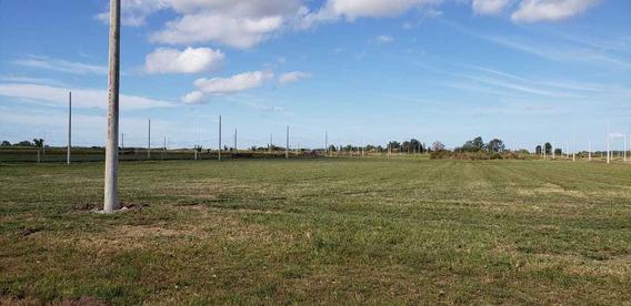 Campo En Alquiler 60.000m2 Rosario, Alvear, Santa Fe