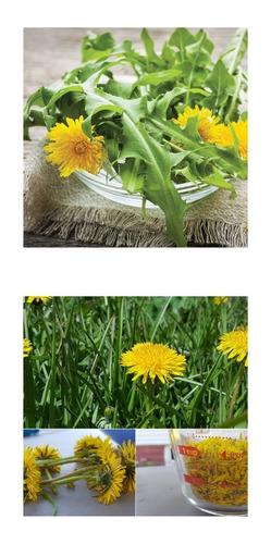Imagem 1 de 10 de 50 Sementes De Dente De Leão Dandelion Taraxacum Flor Erva