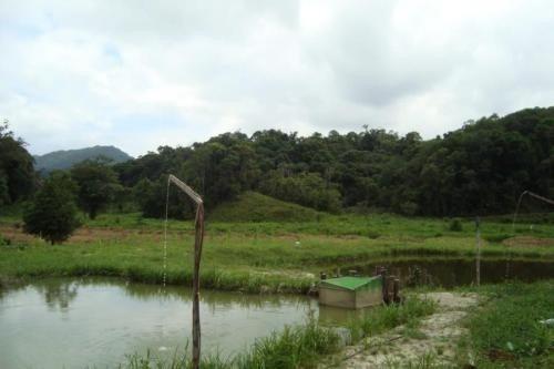 Sitio Em Juquiá, Ribeirão Fundo. Área De 21 Alqueires