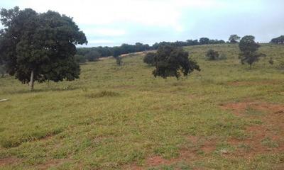 Fazenda A Venda Em Figueirão-ms (dupla Aptidão) - 821