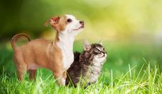 Cremación De Todo Tipo De Mascotas, Precio A Convenir