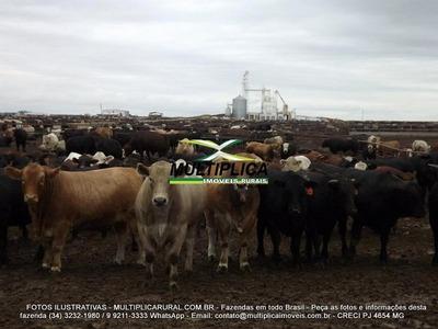 Fazenda Uberlândia, 48,40 Hectares, Casa Sede, Pomar, Curral - 140
