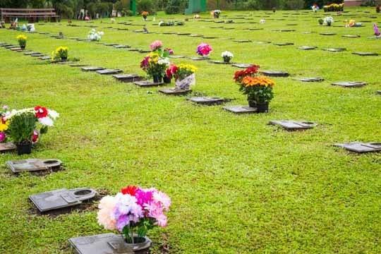 Terreno No Cemitério Parque Das Araucárias Em Colombo