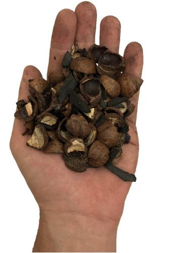 Imagem 1 de 3 de Casca De Macadâmia Com Carvão Orquídeas - Tamanho 5 Litros