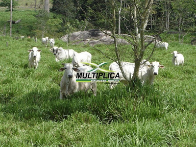 Fazenda Mato Grosso Alto Monte Verde 2.420 Hectares - 255