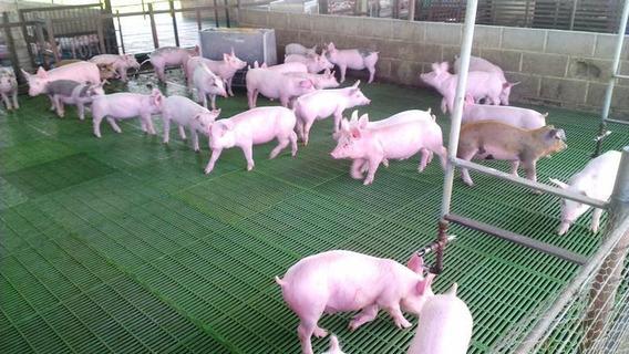 Finca Porcina En Venta Para Inversionistas En Guarico