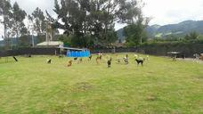 Entrenamiento Y Guardería Para Mascotas Bogotá El Parque