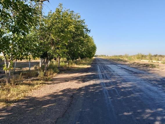 Finca Tres Porteñas, San Martin, Mendoza
