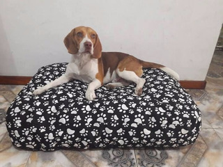 Colchon Cama Puff Para Perros Impermeable Lavable 130x80x15