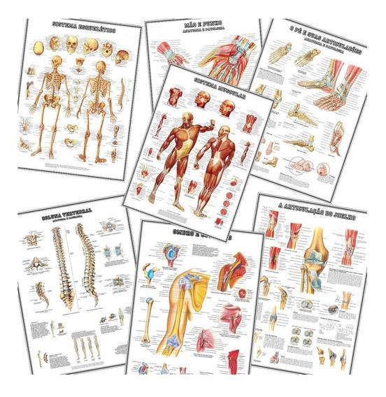 Kit 7 Mapa 60x80cm Ossos Músculos Ombro Pé Mão Coluna Joelho