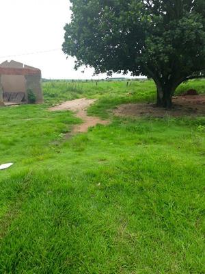 Fazenda Em Cassilândia/ms Excelente P/ Pecuária - 677