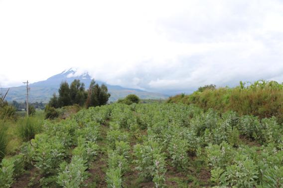 Terreno En La Provincia De Chimborazo