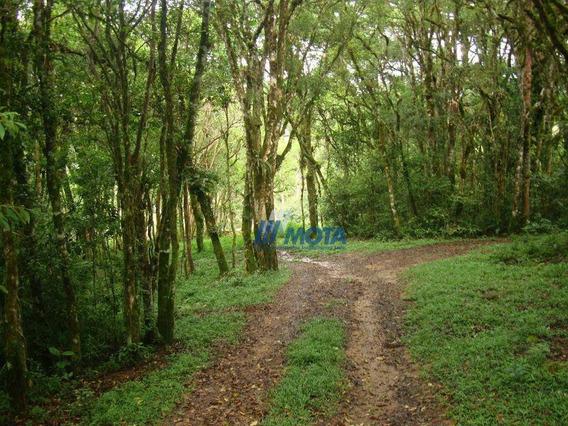 Área Rural À Venda, Quatro Barras . - Ar0020