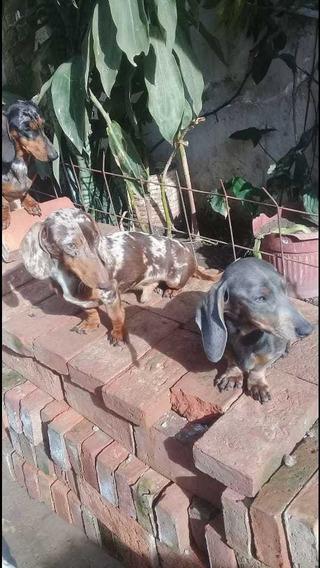 Cachorritos Salchichas