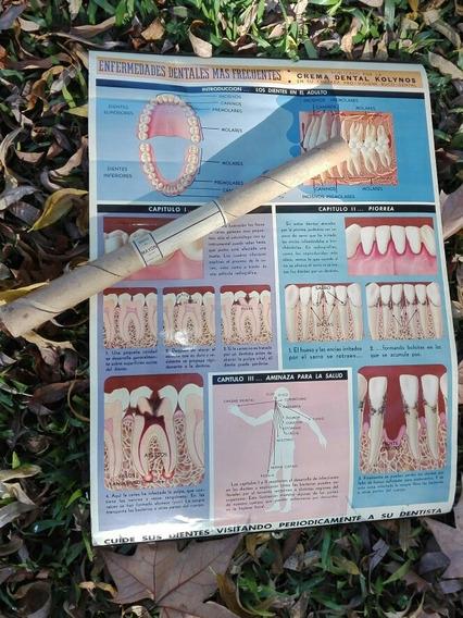 Antiguo Poster De Consultorio Publicidad Kolinos Odontólogo