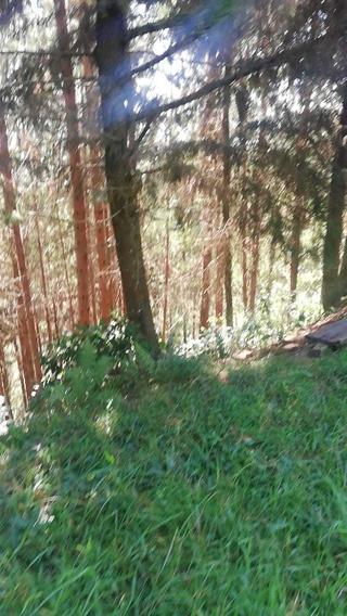 Lote De Gran Extension Con Bosque Pino Patula