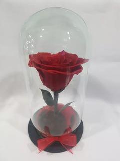 Rosa Eterna Colombiana En Capelo De Cristal