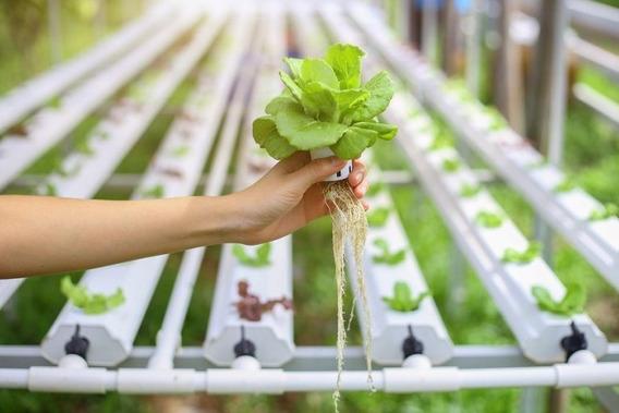 Fertilizante Para Hidroponia Solución A Yb + Instructivos