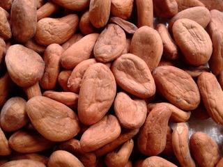 Semillas De Cacao Seco De Chiapas