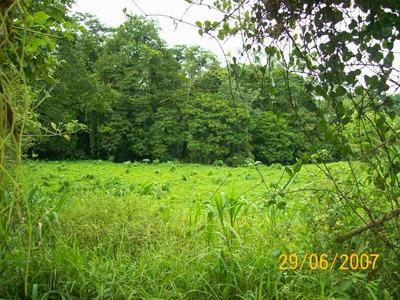 Vendo Terreno De 2 Hectáreas En Palmitas Pococí