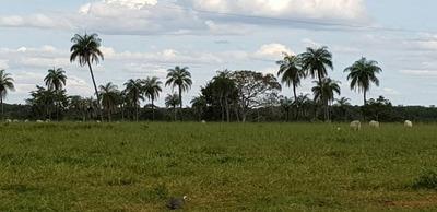 Fazenda A Venda Em Gurupi-to (dupla Aptidão) - 697