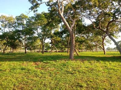 Fazenda A Venda Em Pedro Gomes - Ms (pecuária) - 931