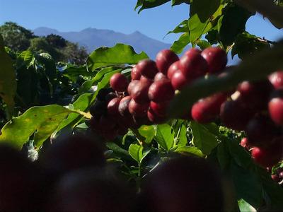 Fazenda De Café À Venda Com Renda Anual De 400 Mil Em Mg.468