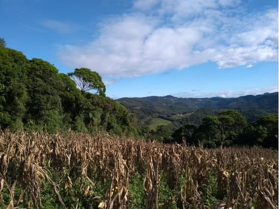 Terreno Com Escritura Pública À Venda, 103.474,54 M² Por R$ 500.000 - Vila Nova - Águas Mornas/sc - Te0609