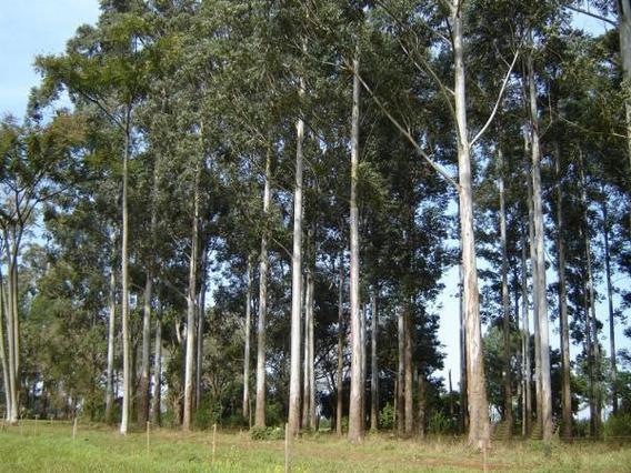 Venta Campo - 23 Has Forestadas